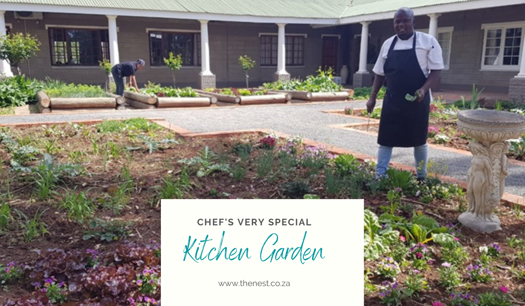 The Nest's very own Kitchen Garden springs to life!