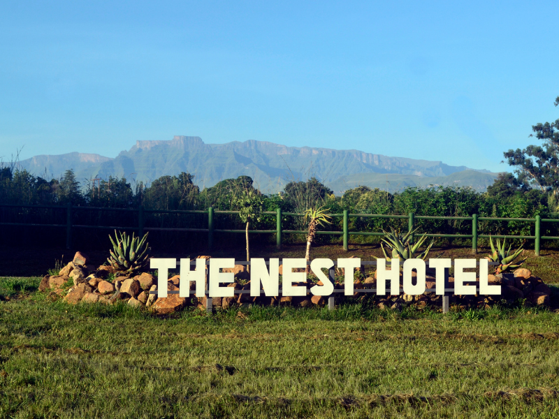 The Nest Hotel is open and we would love for you to visit!